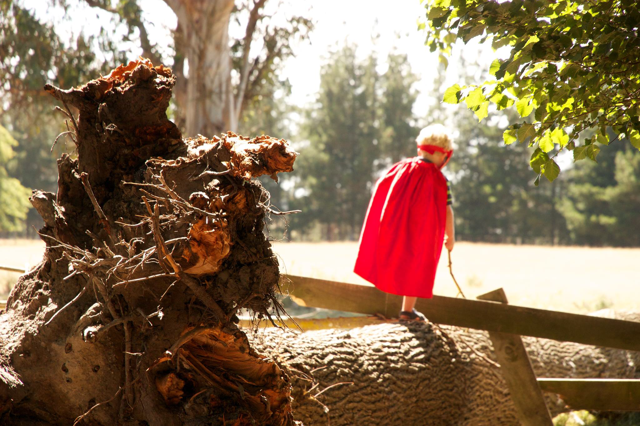Protected: Enchanted – TimberNook South Adelaide