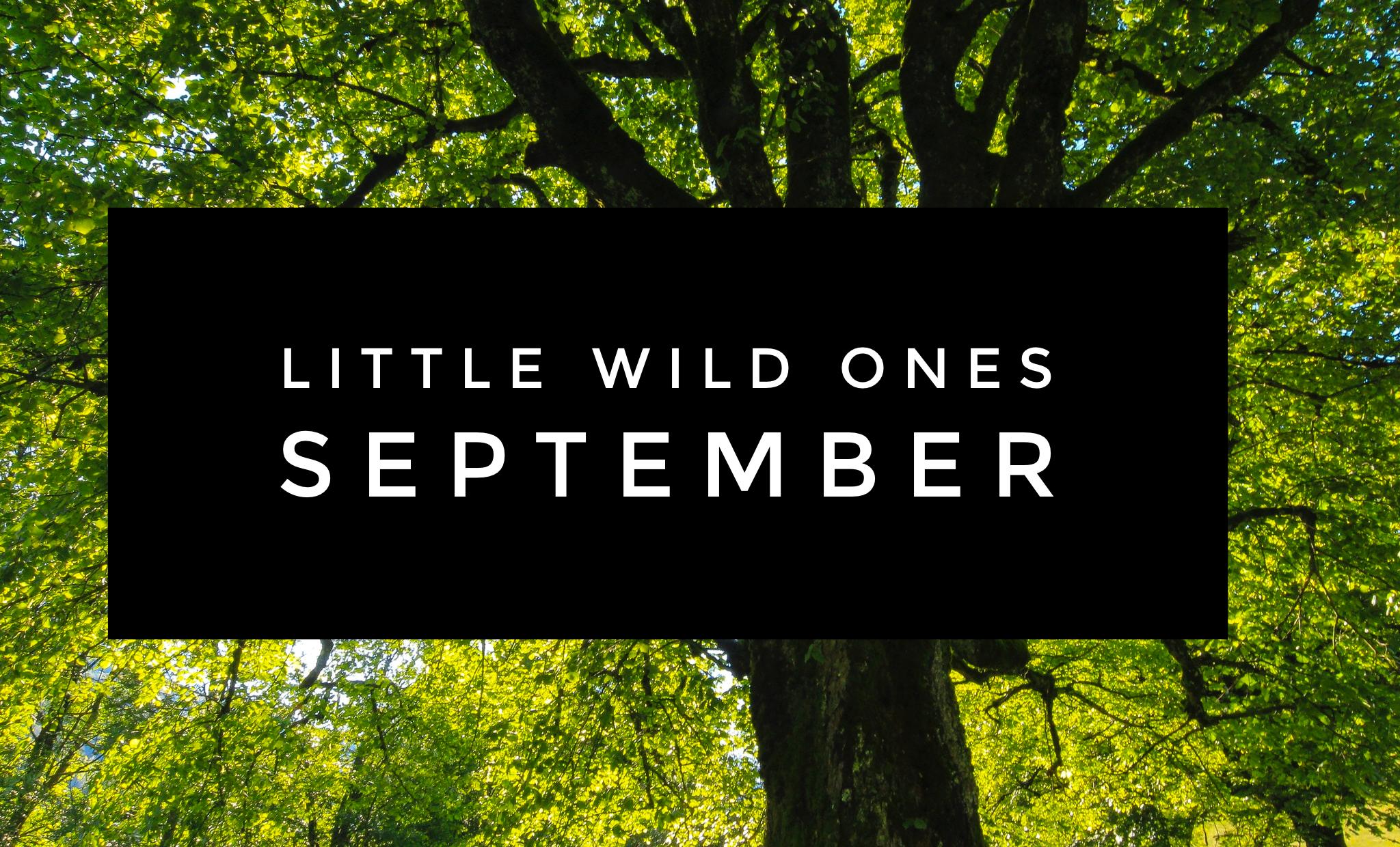 Little Wild Ones - Timbernook of Northeast Oklahoma