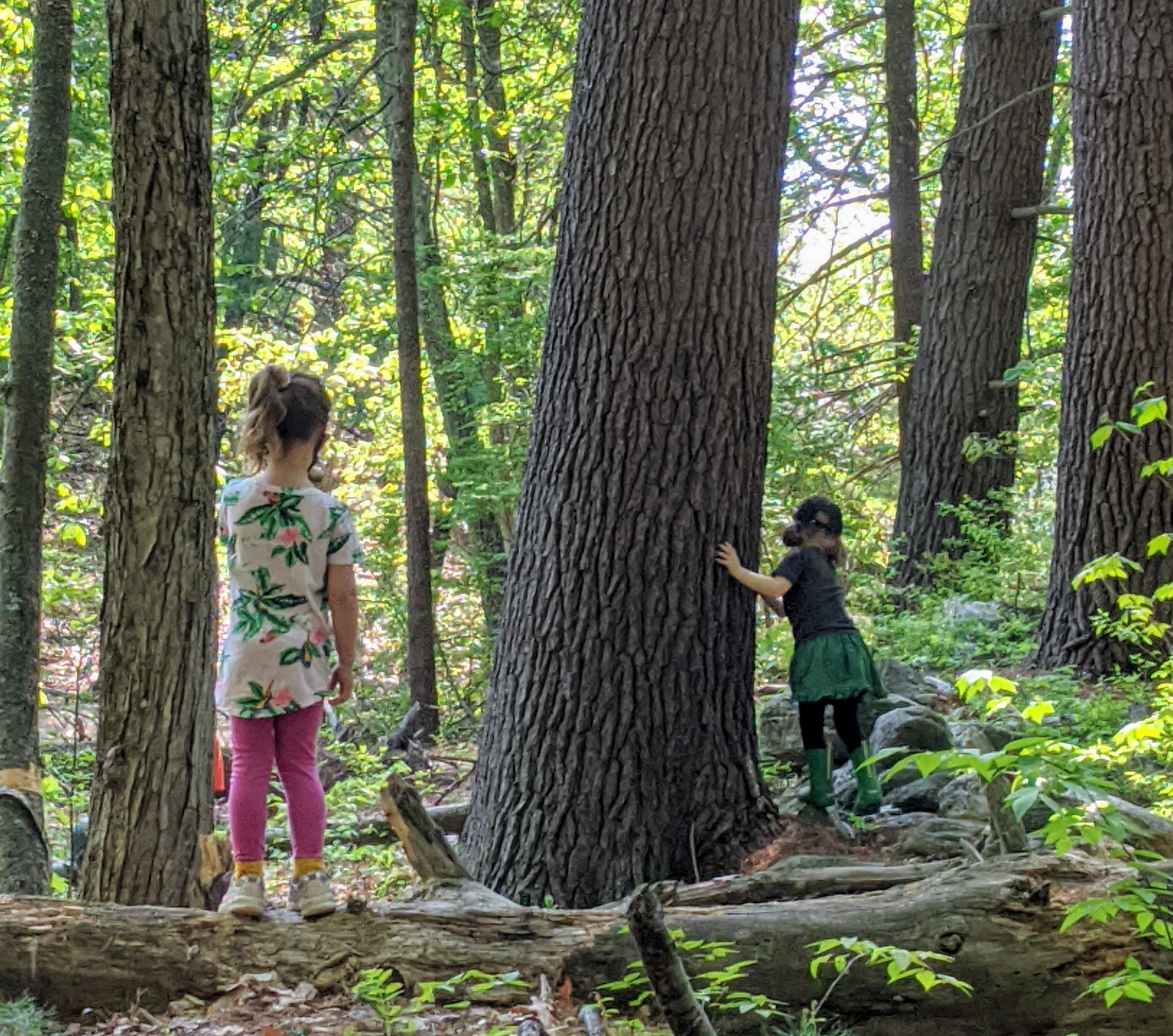 Little Wild Ones – Tuesday – Spring '22 Session II